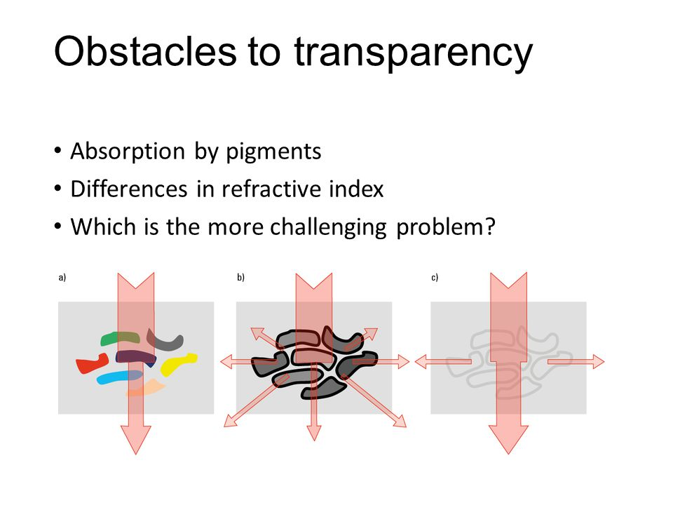 Obstacles to transparency Absorption by pigments Differences in refractive index Which is the more challenging problem