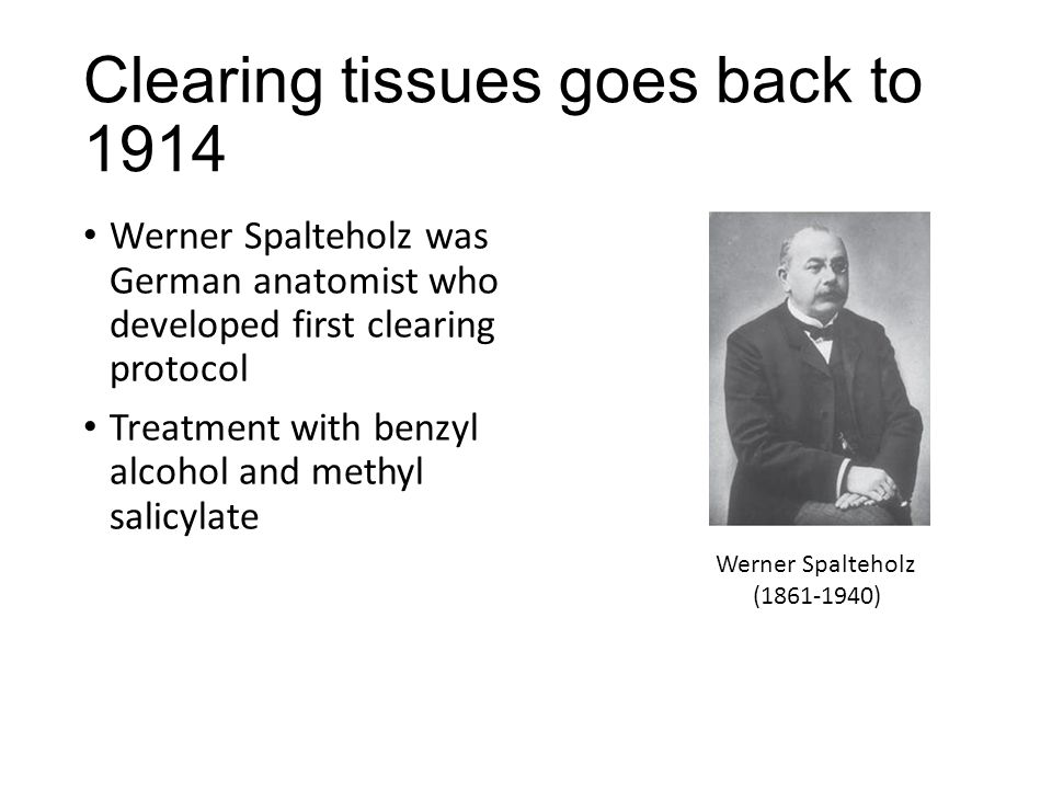 Clearing tissues goes back to 1914 Werner Spalteholz was German anatomist who developed first clearing protocol Treatment with benzyl alcohol and methyl salicylate Werner Spalteholz (1861-1940)