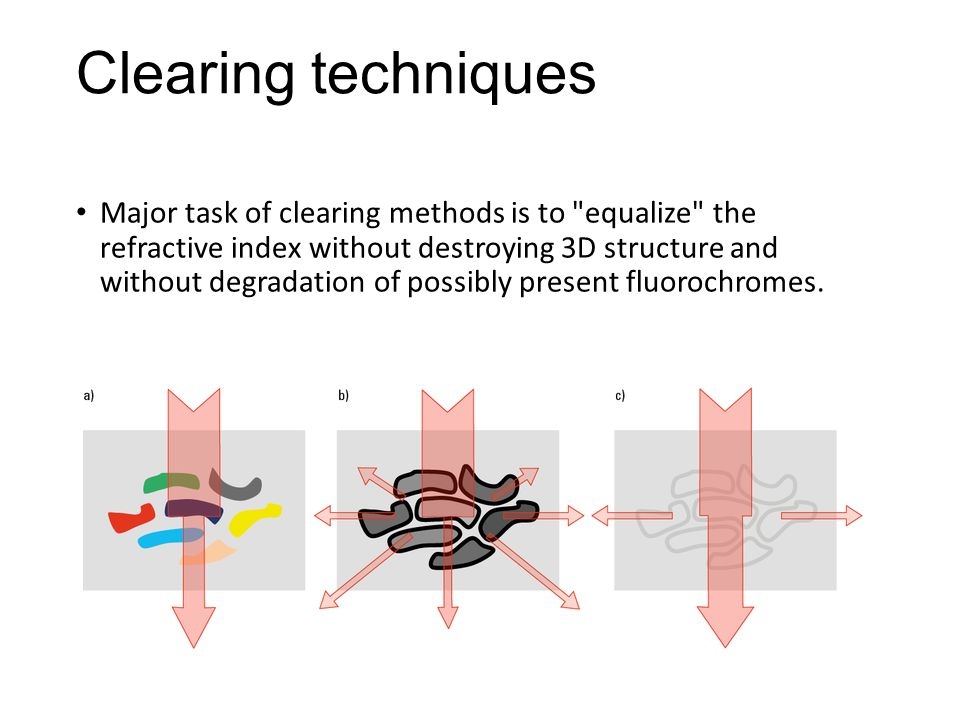 Clearing techniques Major task of clearing methods is to equalize the refractive index without destroying 3D structure and without degradation of possibly present fluorochromes.