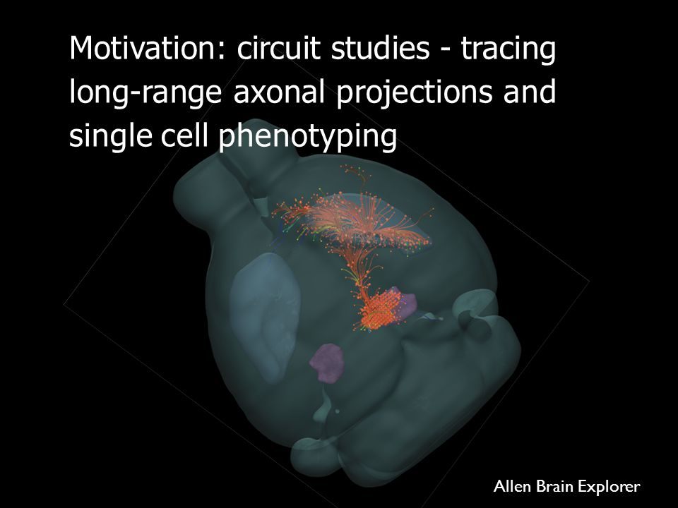 Motivation: circuit studies - tracing long-range axonal projections and single cell phenotyping Allen Brain Explorer