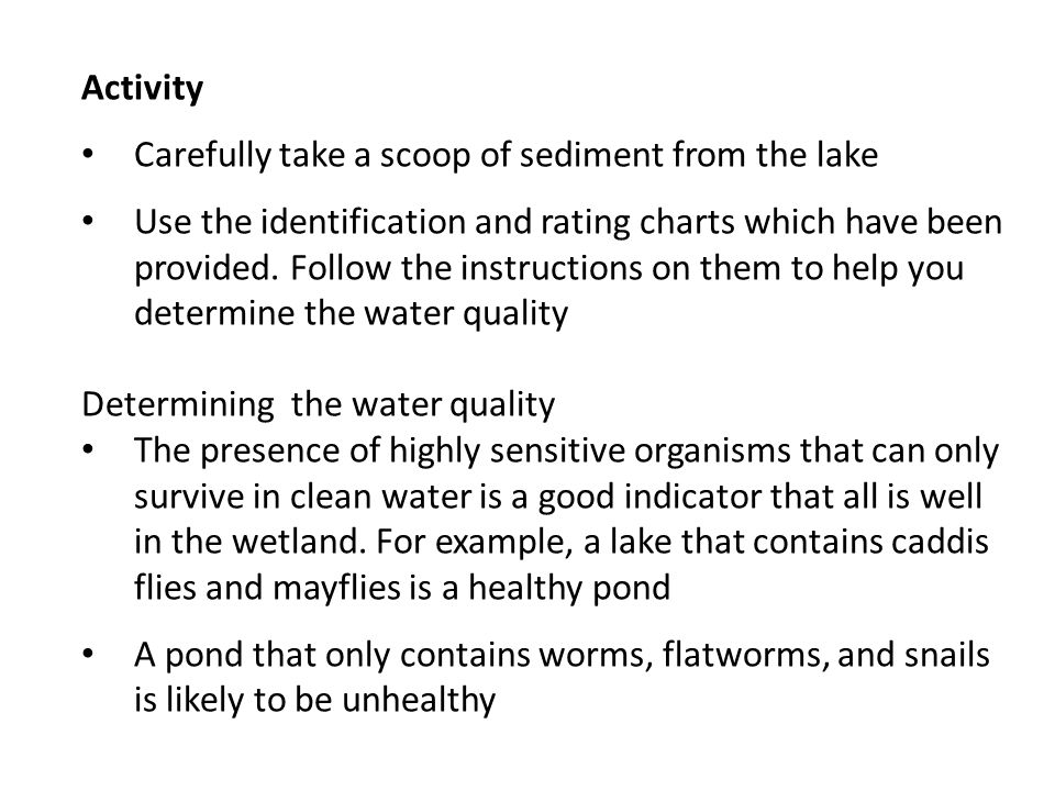 Activity Carefully take a scoop of sediment from the lake Use the identification and rating charts which have been provided.