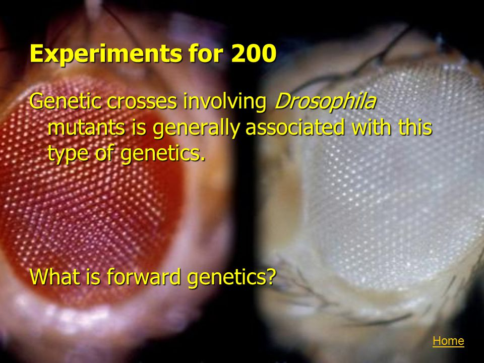 Experiments for 200 Genetic crosses involving Drosophila mutants is generally associated with this type of genetics.