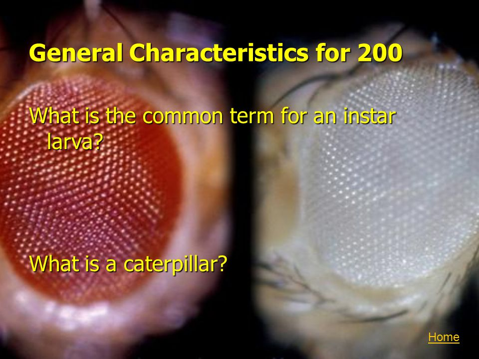 General Characteristics for 200 What is the common term for an instar larva.