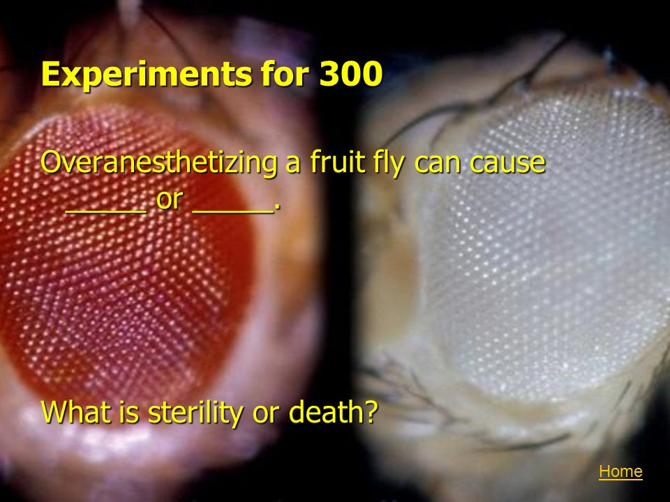 Experiments for 300 Overanesthetizing a fruit fly can cause _____ or _____.
