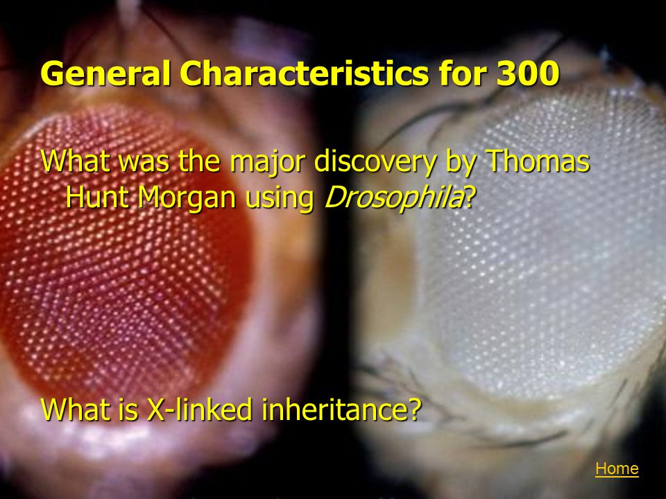 General Characteristics for 300 What was the major discovery by Thomas Hunt Morgan using Drosophila.