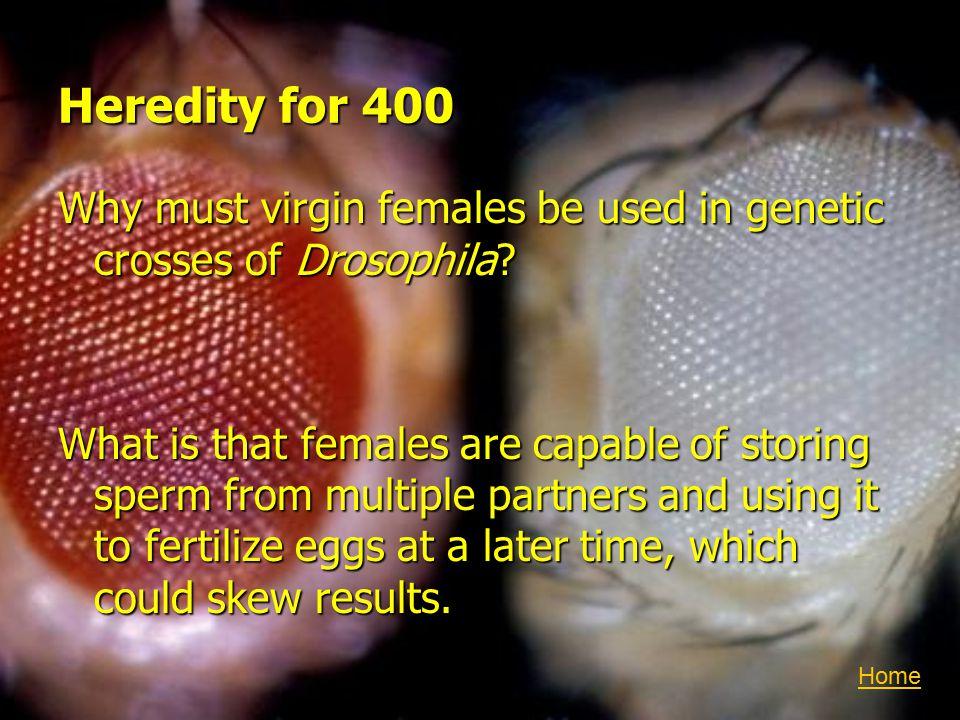 Heredity for 400 Why must virgin females be used in genetic crosses of Drosophila.