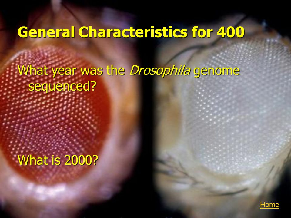 General Characteristics for 400 What year was the Drosophila genome sequenced What is 2000 Home