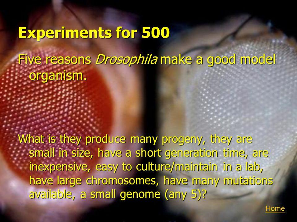 Experiments for 500 Five reasons Drosophila make a good model organism.