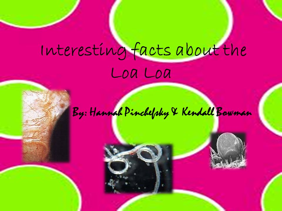 Interesting facts about the Loa Loa By: Hannah Pinchefsky & Kendall Bowman
