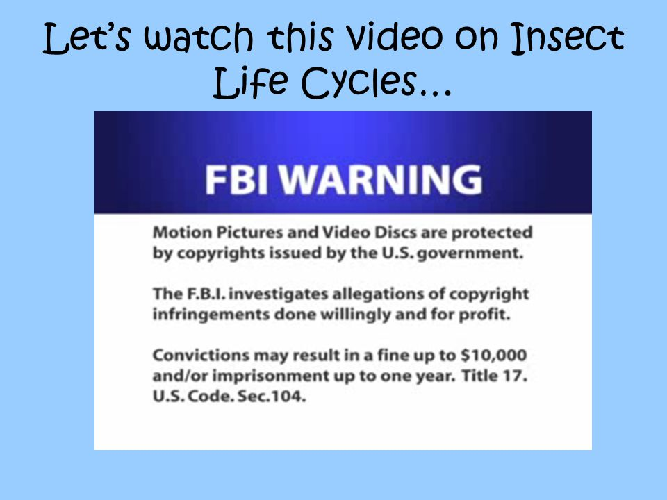 Let's watch this video on Insect Life Cycles…