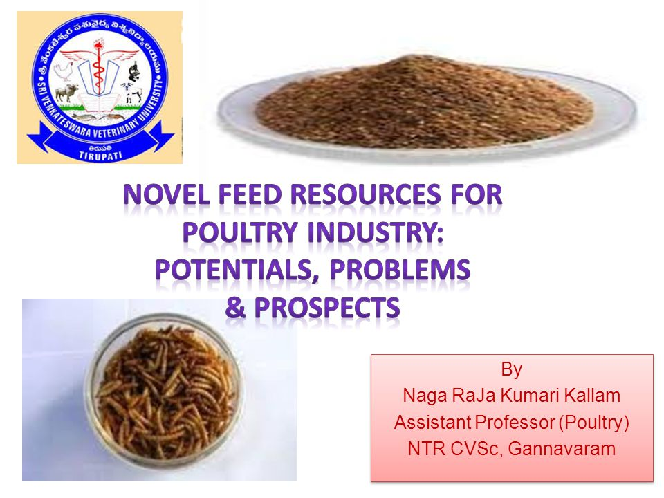 By Naga RaJa Kumari Kallam Assistant Professor (Poultry) NTR CVSc, Gannavaram By Naga RaJa Kumari Kallam Assistant Professor (Poultry) NTR CVSc, Gannavaram