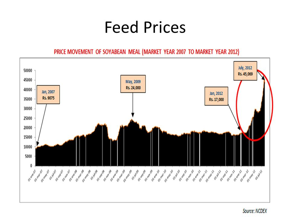 Feed Prices