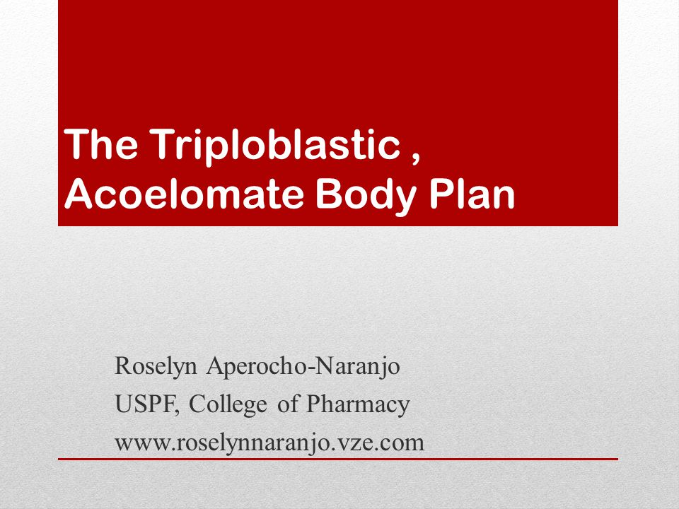 The Triploblastic, Acoelomate Body Plan Roselyn Aperocho-Naranjo USPF, College of Pharmacy www.roselynnaranjo.vze.com