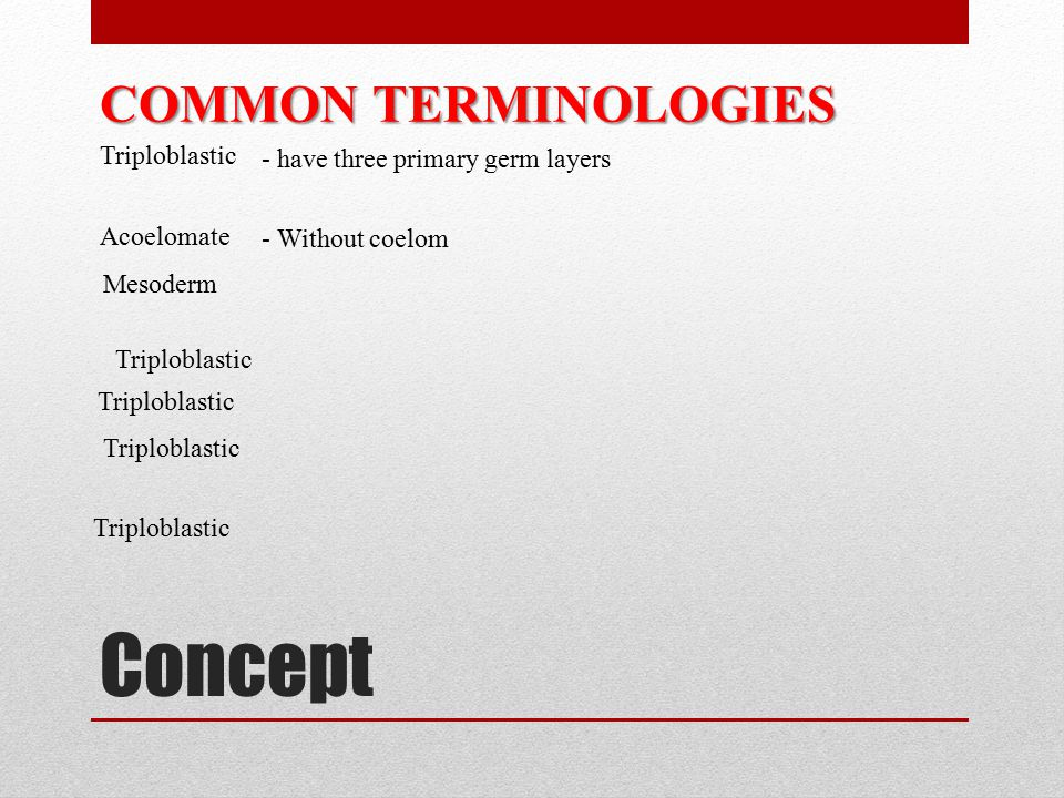 Concept COMMON TERMINOLOGIES Triploblastic - have three primary germ layers Acoelomate Triploblastic Mesoderm Triploblastic - Without coelom