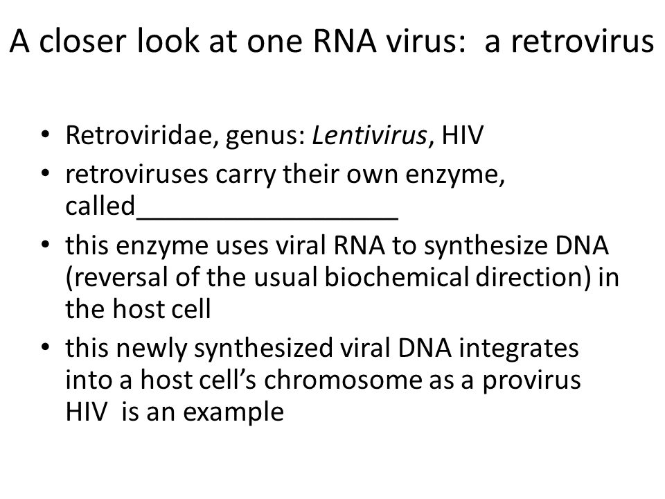 A closer look at one RNA virus: a retrovirus Retroviridae, genus: Lentivirus, HIV retroviruses carry their own enzyme, called__________________ this e