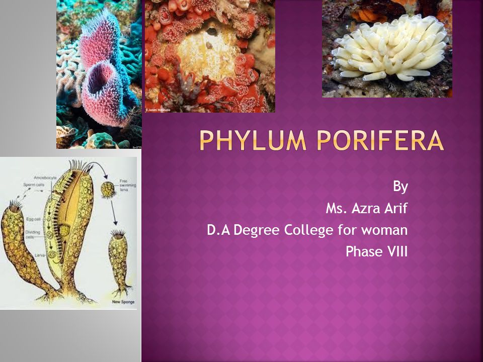 By Ms. Azra Arif D.A Degree College for woman Phase VIII