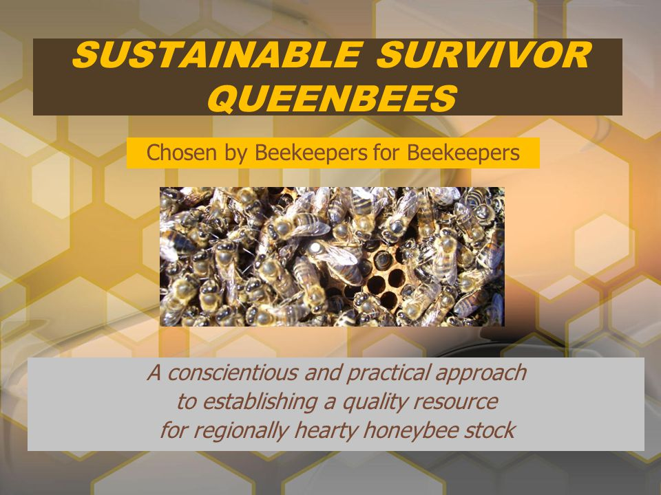 SUSTAINABLE SURVIVOR QUEENBEES A conscientious and practical approach to establishing a quality resource for regionally hearty honeybee stock Chosen b
