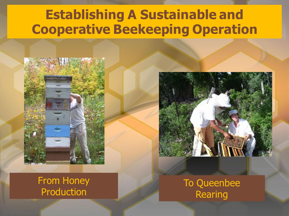 From Honey Production To Queenbee Rearing Establishing A Sustainable and Cooperative Beekeeping Operation