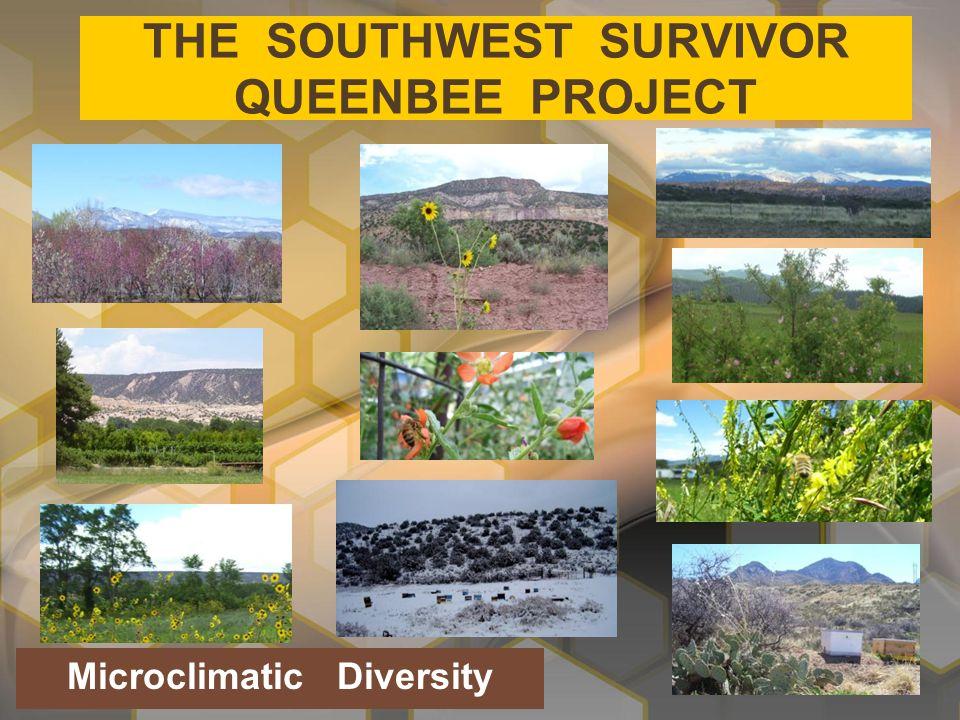 THE SOUTHWEST SURVIVOR QUEENBEE PROJECT Microclimatic Diversity