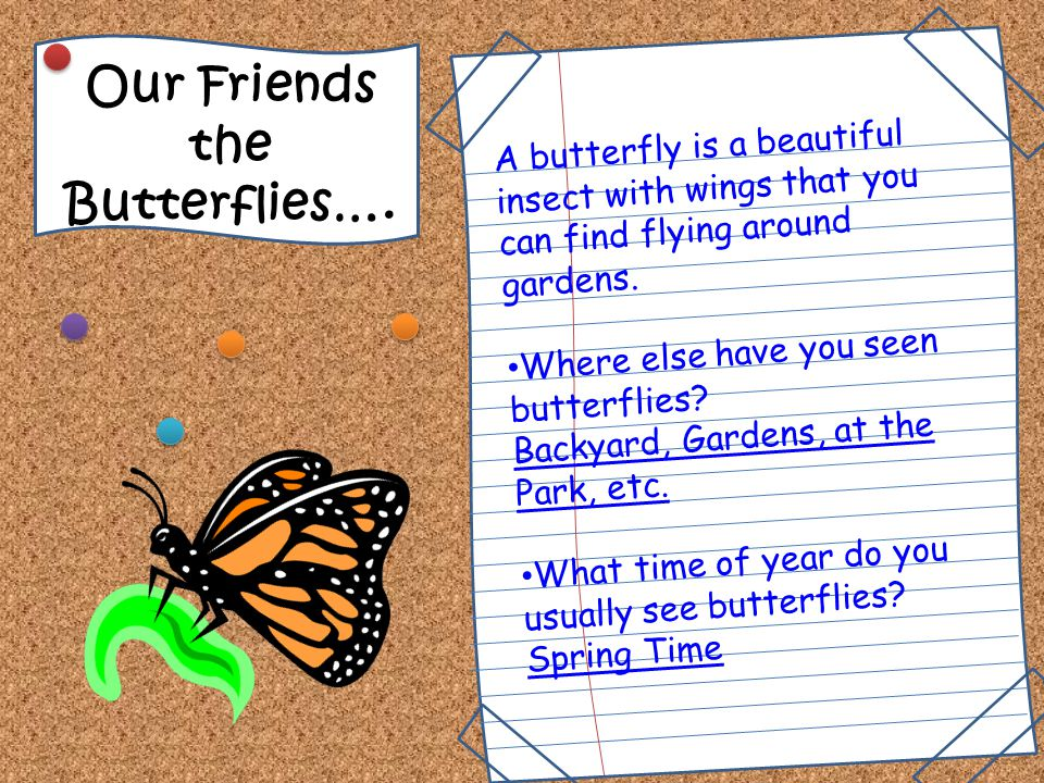 The Life Cyle of a Butterfly… Mrs. Livingston & Mrs. Warburton's 2 nd Grade Class Science