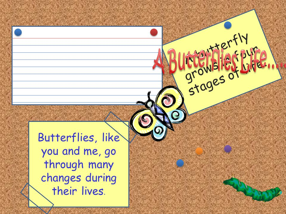 Our Friends the Butterflies…. A butterfly is a beautiful insect with wings that you can find flying around gardens. Where else have you seen butterfli