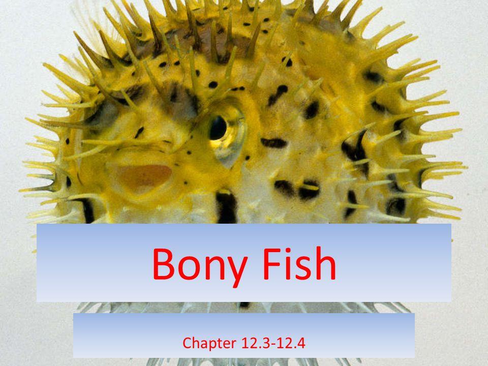 Bony Fish Chapter 12.3-12.4