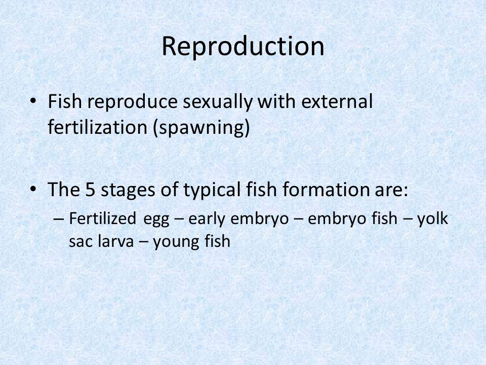 Reproduction Fish reproduce sexually with external fertilization (spawning) The 5 stages of typical fish formation are: – Fertilized egg – early embryo – embryo fish – yolk sac larva – young fish