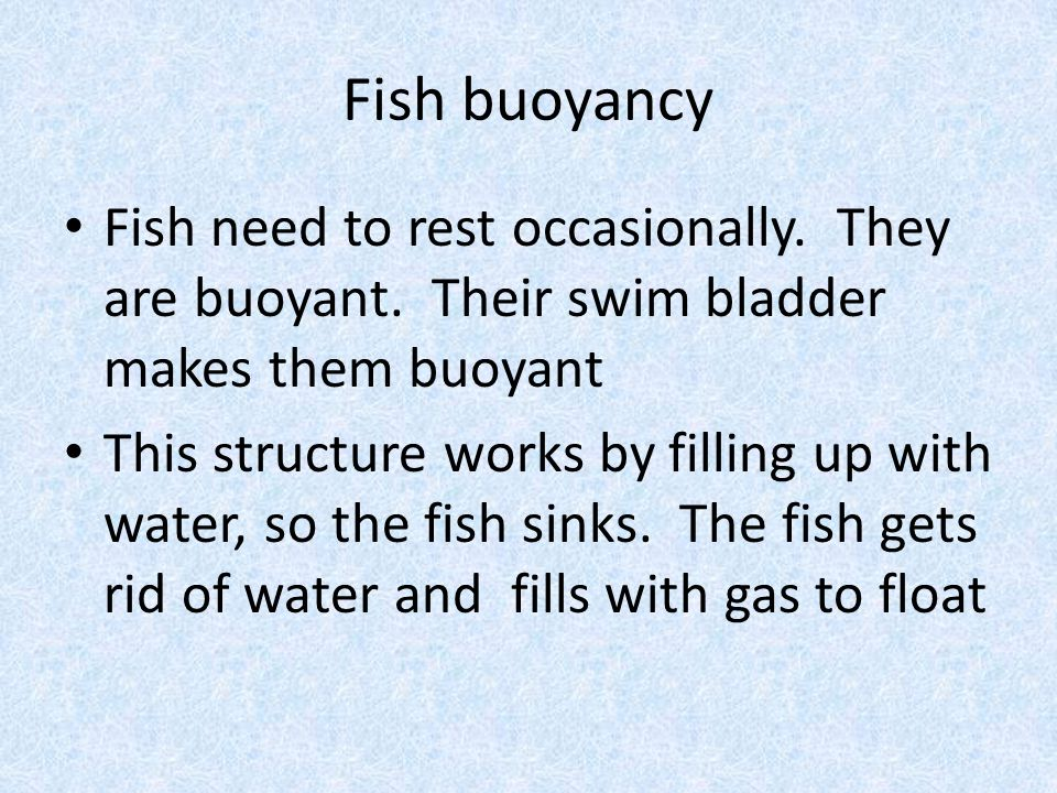 Fish buoyancy Fish need to rest occasionally. They are buoyant.