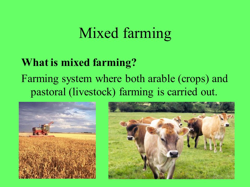 13 Mixed farming What is mixed farming? Farming system where both arable (crops) and pastoral (livestock) farming is carried out.