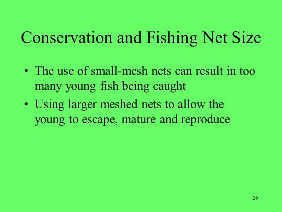 29 Conservation and Fishing Net Size The use of small-mesh nets can result in too many young fish being caught Using larger meshed nets to allow the y