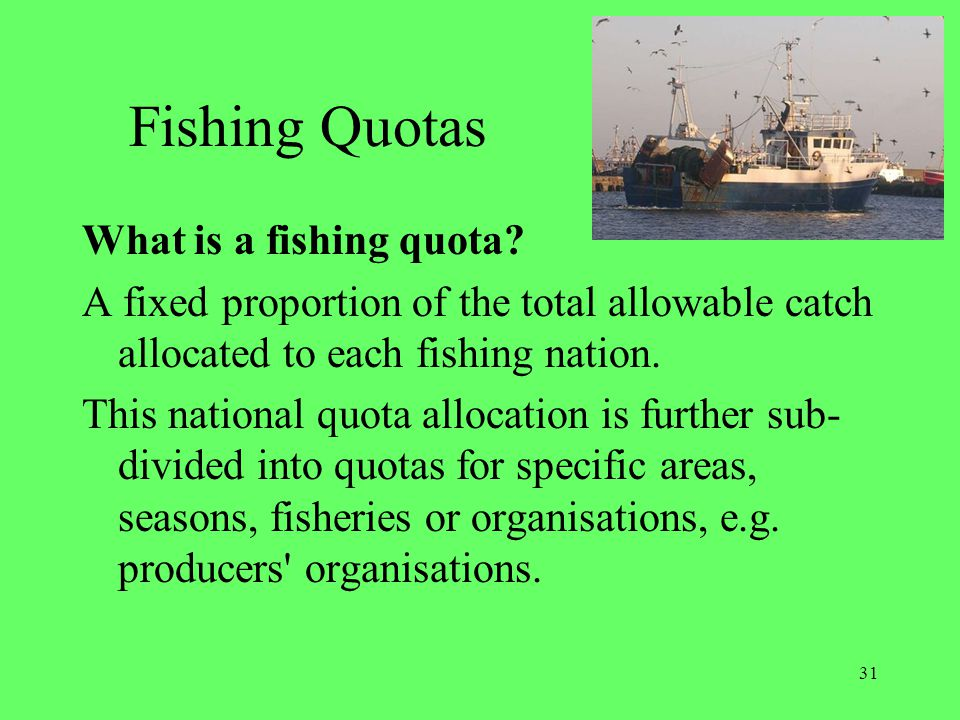 31 Fishing Quotas What is a fishing quota? A fixed proportion of the total allowable catch allocated to each fishing nation. This national quota alloc