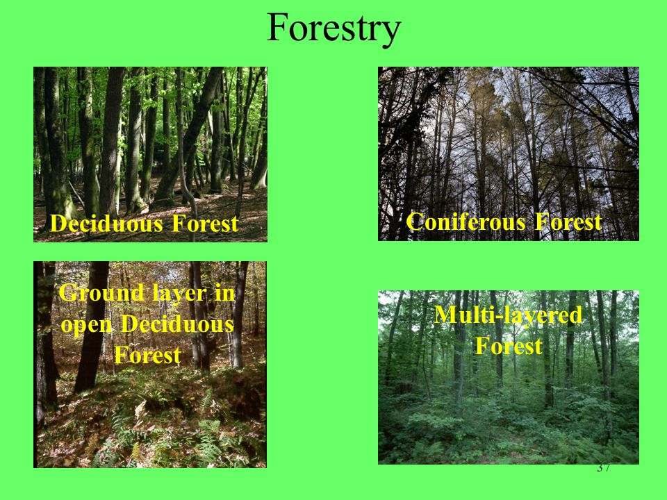 37 Forestry Coniferous Forest Deciduous Forest Multi-layered Forest Ground layer in open Deciduous Forest