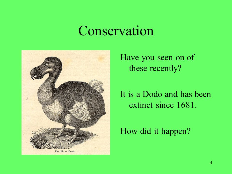 Conservation 4 Have you seen on of these recently? It is a Dodo and has been extinct since 1681. How did it happen?