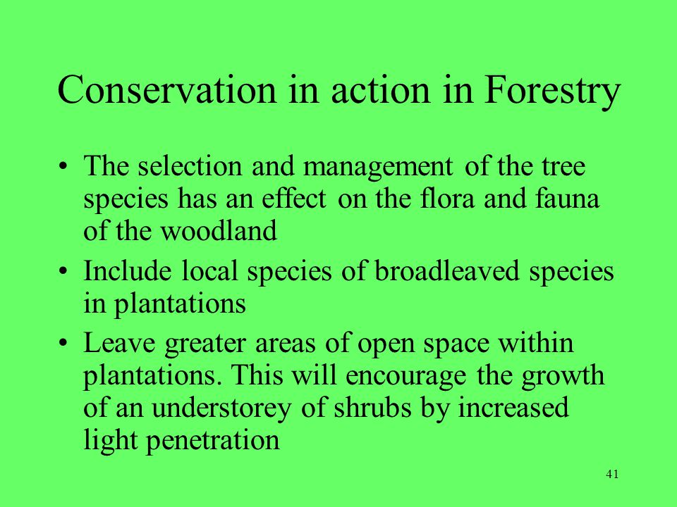 41 Conservation in action in Forestry The selection and management of the tree species has an effect on the flora and fauna of the woodland Include lo
