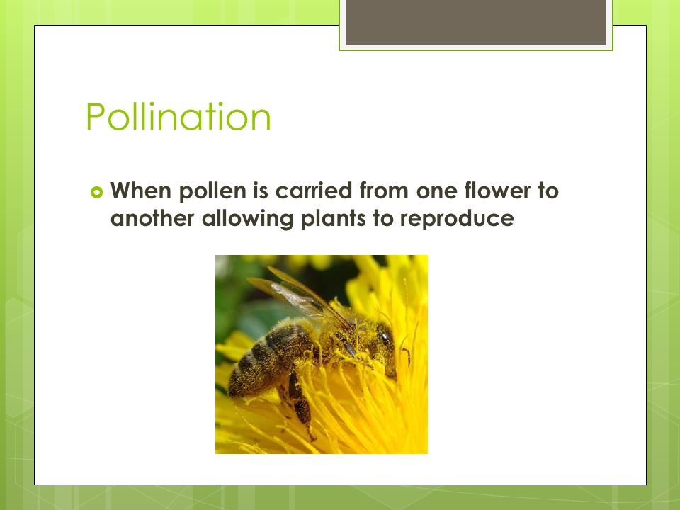 Pollination  When pollen is carried from one flower to another allowing plants to reproduce