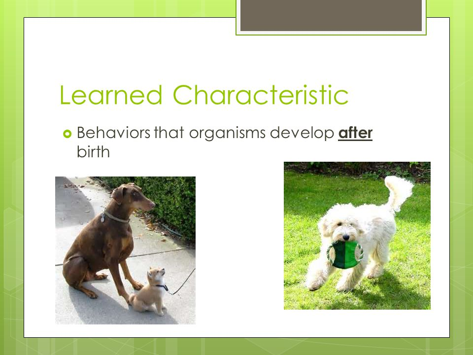Learned Characteristic  Behaviors that organisms develop after birth