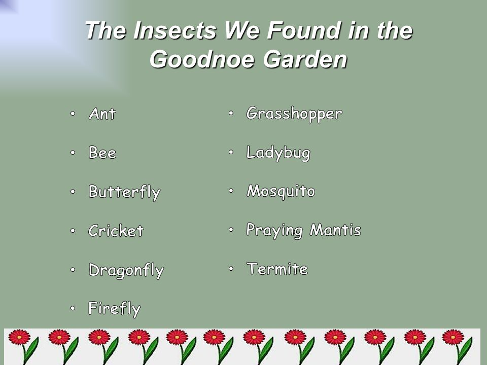 The Insects We Found in the Goodnoe Garden