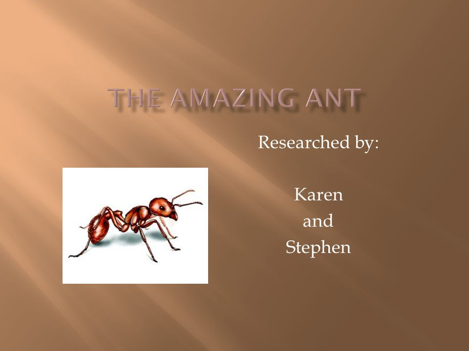Researched by: Matthew Mannino And Ava Mount MAGNIFICENT MOSQUITO