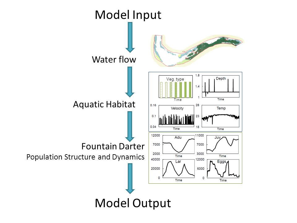 Model Input Water flow Aquatic Habitat Fountain Darter Population Structure and Dynamics Model Output
