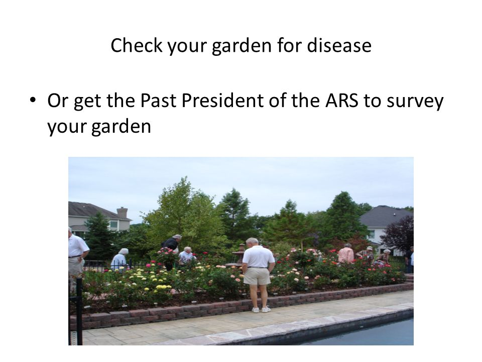 Check your garden for disease Or get the Past President of the ARS to survey your garden