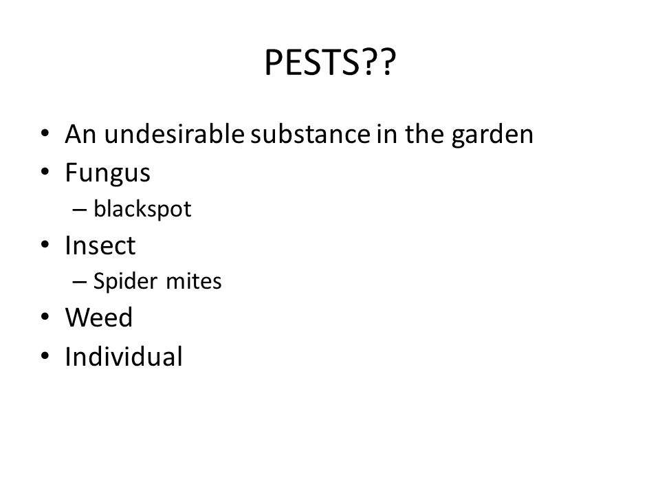 PESTS?? An undesirable substance in the garden Fungus – blackspot Insect – Spider mites Weed Individual