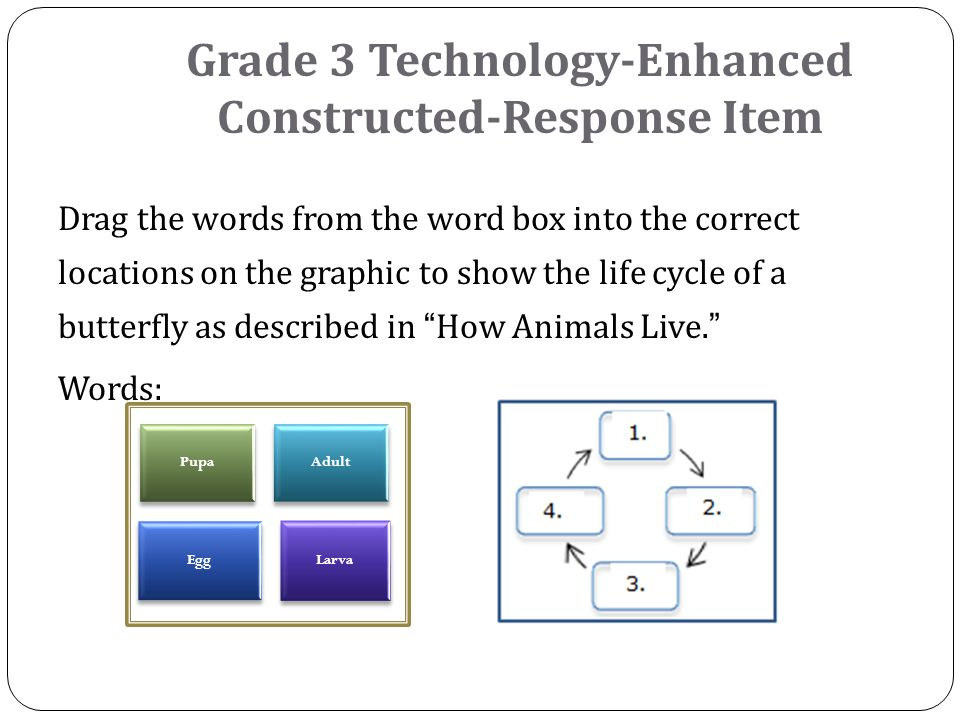 Drag the words from the word box into the correct locations on the graphic to show the life cycle of a butterfly as described in How Animals Live. Words: Grade 3 Technology-Enhanced Constructed-Response Item Pupa Adult Egg Larva