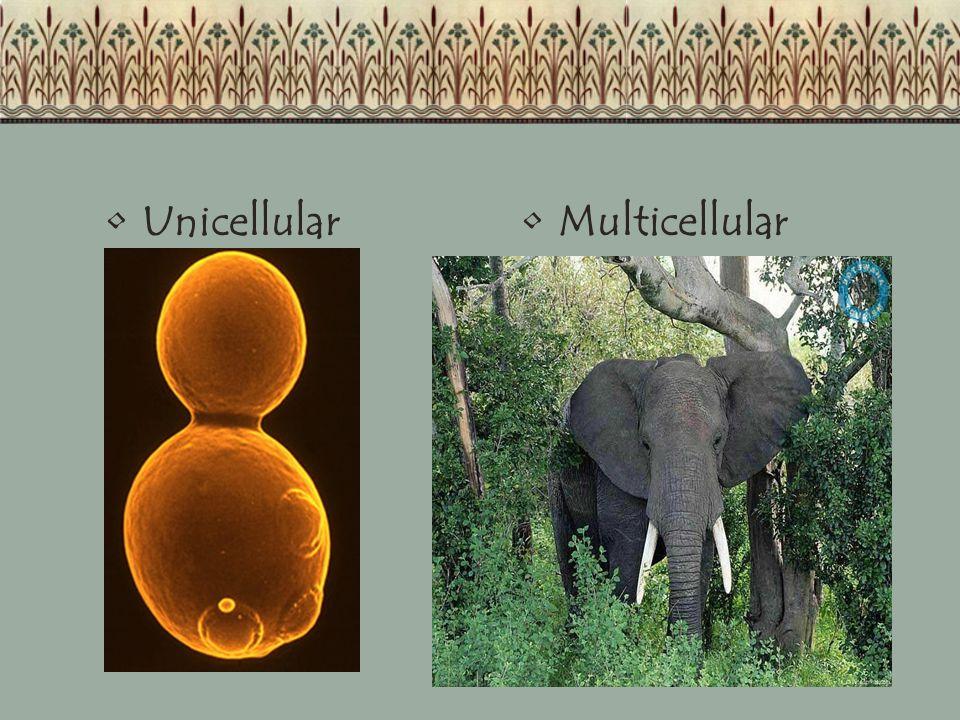 UnicellularMulticellular