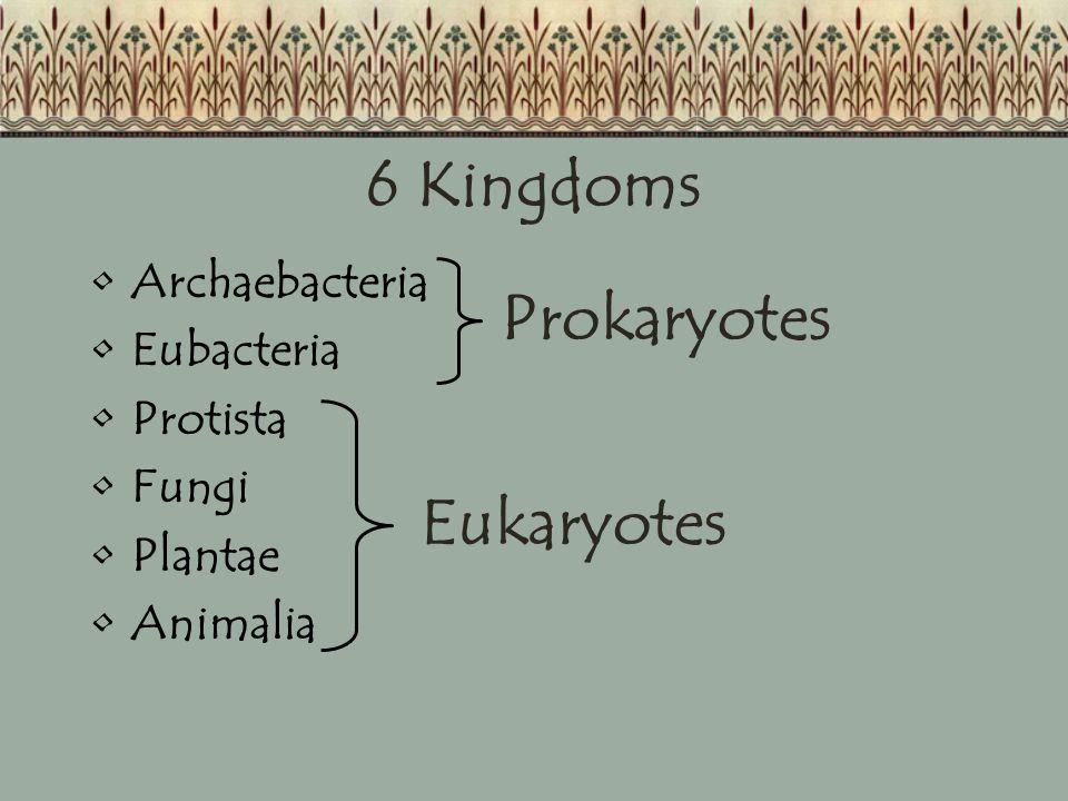6 Kingdoms Archaebacteria Eubacteria Protista Fungi Plantae Animalia Prokaryotes Eukaryotes