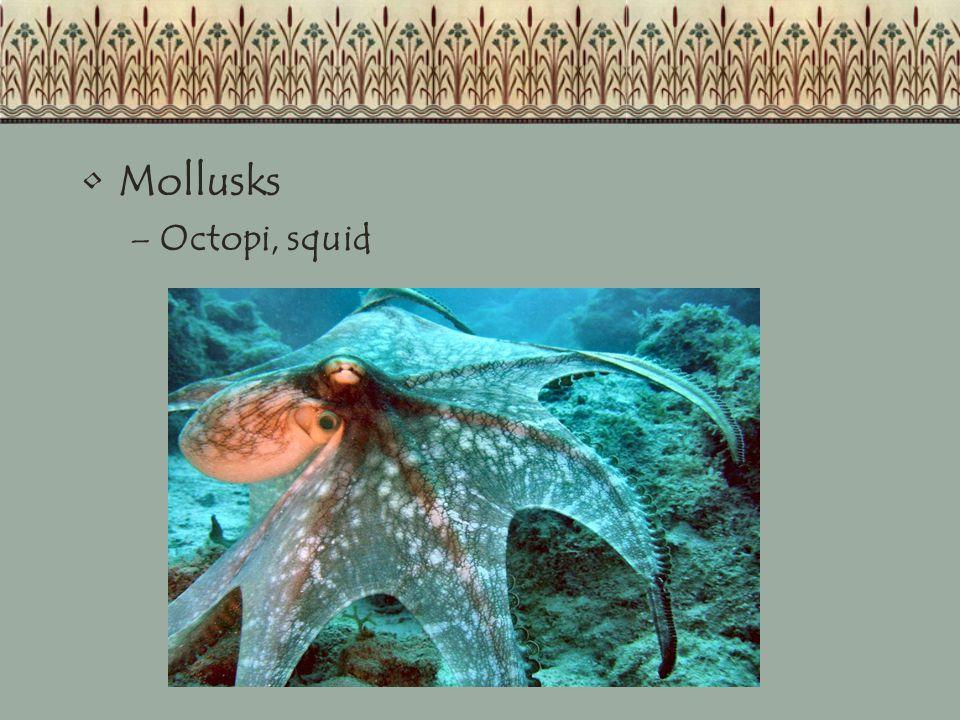 Mollusks –Octopi, squid