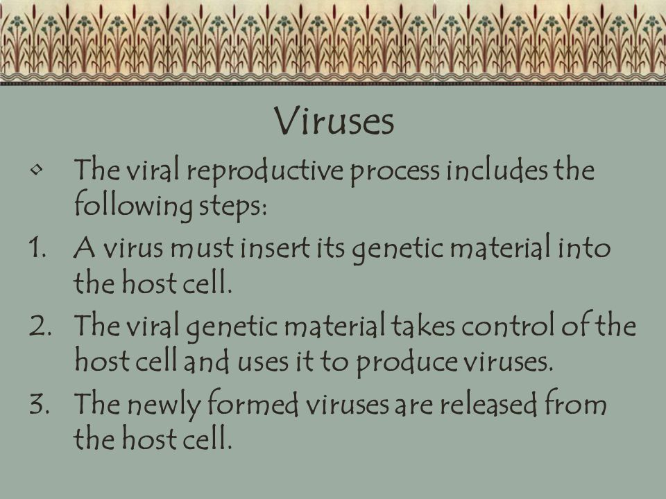 Viruses The viral reproductive process includes the following steps: 1.A virus must insert its genetic material into the host cell.
