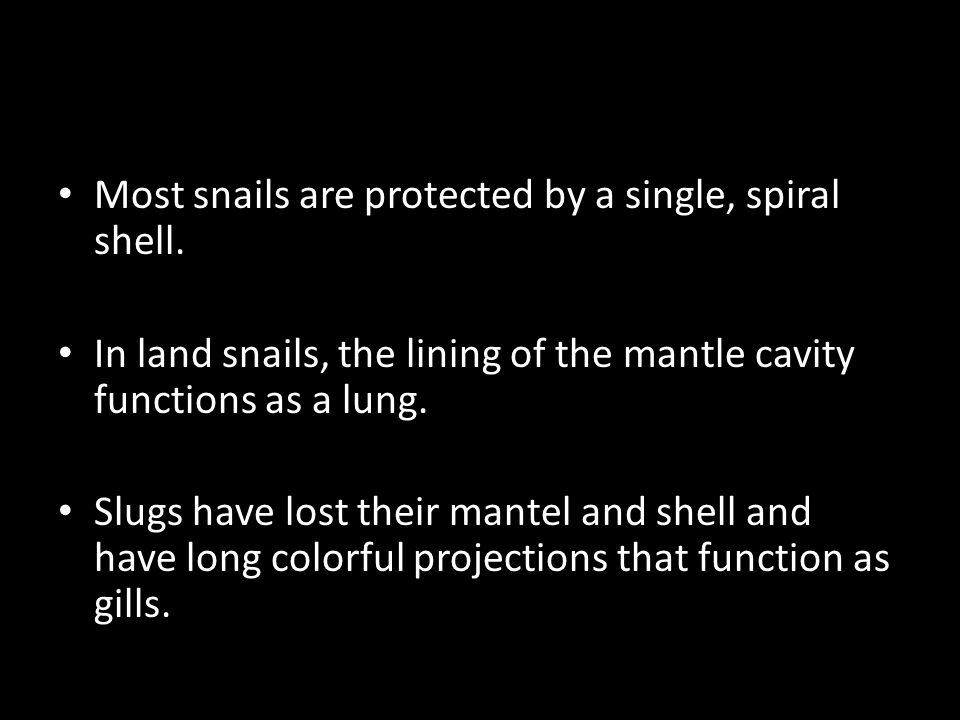 Most snails are protected by a single, spiral shell. In land snails, the lining of the mantle cavity functions as a lung. Slugs have lost their mantel