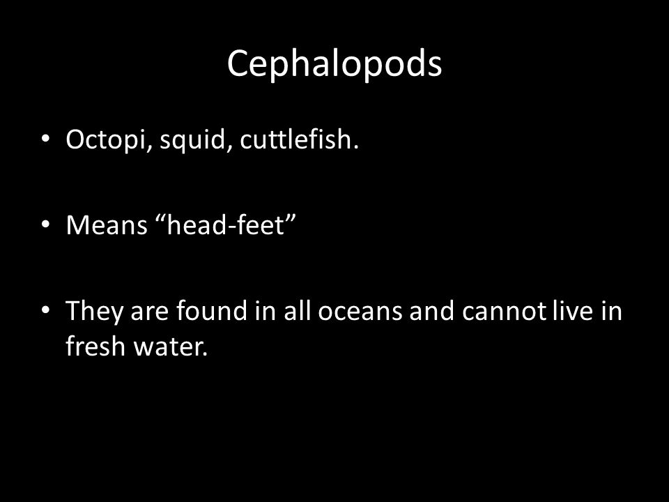 """Cephalopods Octopi, squid, cuttlefish. Means """"head-feet"""" They are found in all oceans and cannot live in fresh water."""