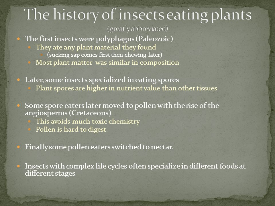 The first insects were polyphagus (Paleozoic) They ate any plant material they found (sucking sap comes first then chewing later) Most plant matter wa