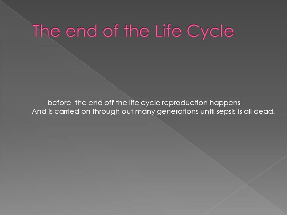 before the end off the life cycle reproduction happens And is carried on through out many generations until sepsis is all dead.